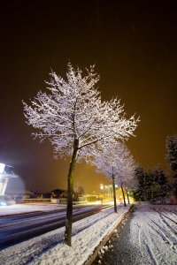 STILLS_FROZEN_TREE_1