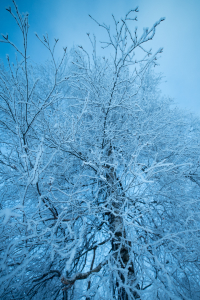 STILLS_FROZEN_TREE_NEW